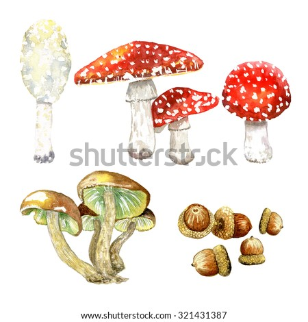 Watercolor autumn collection. Set mushroom Fly agaric . set of toadstools.Illustration of the different types of mushrooms - stock photo