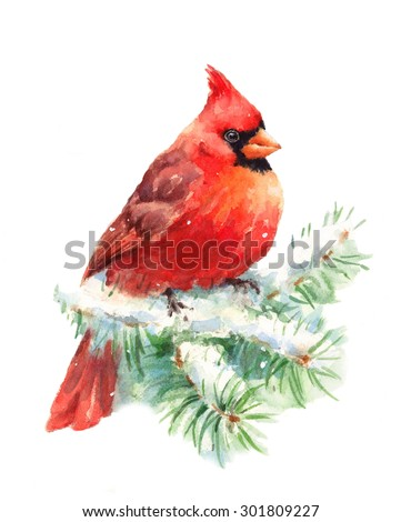 Watercolor Bird Cardinal Winter Christmas Hand Painted Greeting Card Illustration Isolated on white background - stock photo