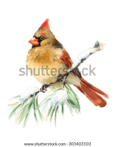 Watercolor Bird Female Cardinal Winter Christmas Hand Painted Greeting Card Illustration - stock photo