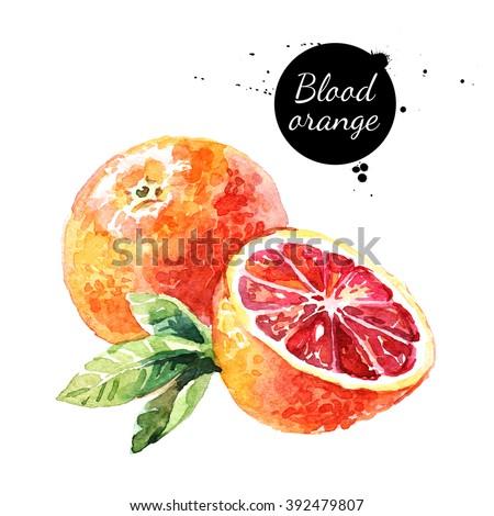 Watercolor blood orange. Isolated eco food fruit illustration on white background - stock photo