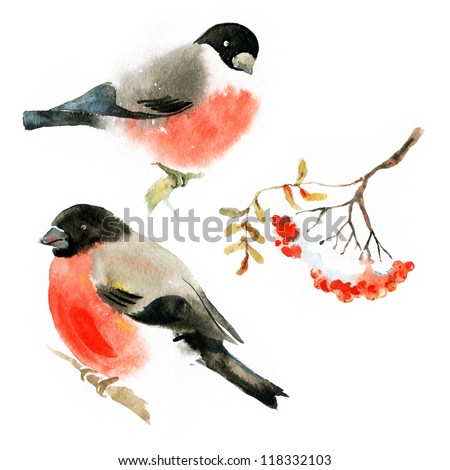 Watercolor bullfinch and ashberry - stock photo