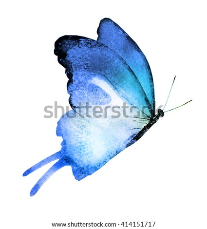 Watercolor butterfly , isolated on white - stock photo