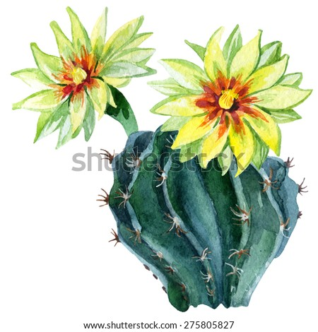 Watercolor cactus isolated on white background. Hand painted illustration - stock photo