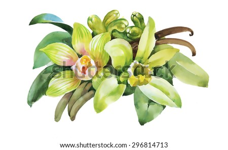 Watercolor colorful floral illustration isolated on white background - stock photo