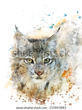 Watercolor Digital Painting Of  Canada Lynx - stock photo