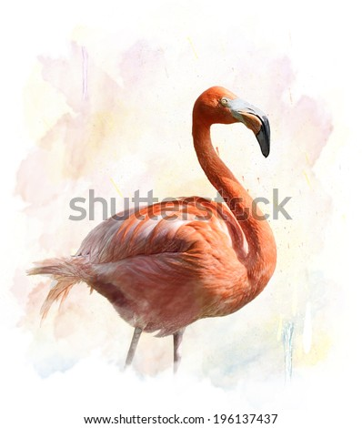 Watercolor Digital Painting Of Flamingo - stock photo