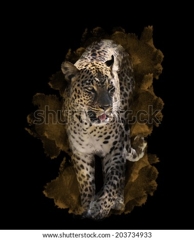Watercolor Digital Painting Of  Leopard On Black Background - stock photo