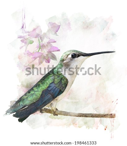 Watercolor Digital Painting Of Perching Hummingbird - stock photo