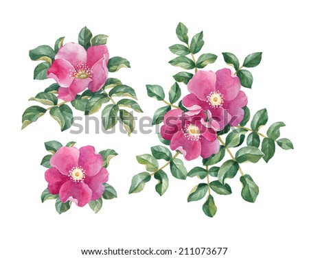 Watercolor dog rose illustration  - stock photo