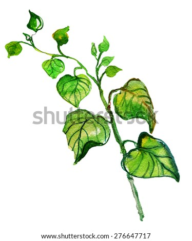watercolor drawing green brunches with leaves, watercolor design elements, hand drawn  - stock photo