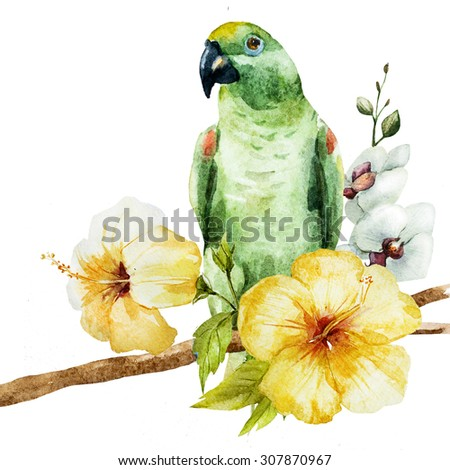 watercolor drawing isolated, green parrot with hibiscus flowers, tropical illustration, fashion print with a parrot with palm leaves and flowers of hibiscus, - stock photo