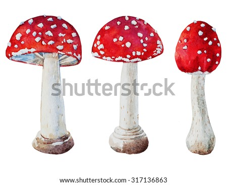 watercolor drawing isolated mushrooms, autumn botanical collection, Amanita mushroom - stock photo