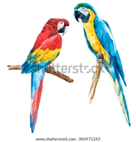 watercolor drawing of a bird isolated macaw - stock photo