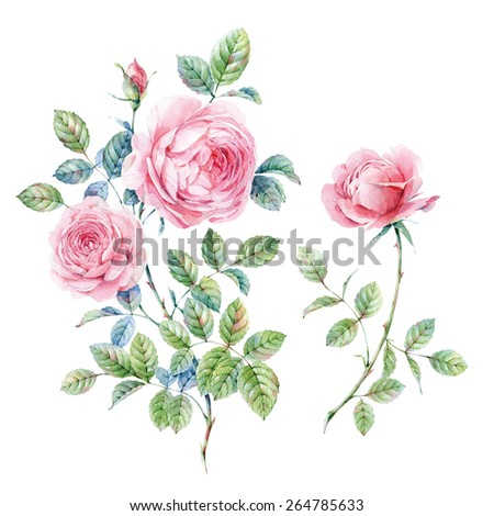 Watercolor English roses - stock photo