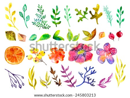 Watercolor floral elements collection, watercolor painting - stock photo