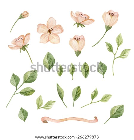 Watercolor floral elements set. Hand drawn spring  illustration  isolated on white background.  - stock photo