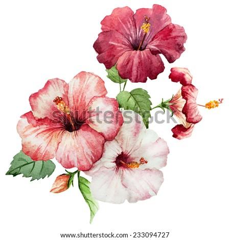 watercolor, flower, hibiscus - stock photo