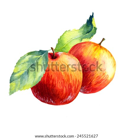 watercolor fruit apple  on white background - stock photo