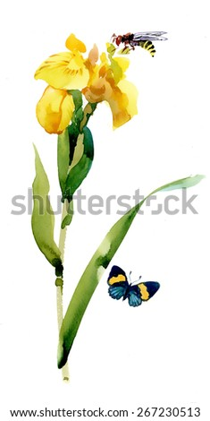 Watercolor garden yellow flowers with butterfly and bee isolated on white background - stock photo