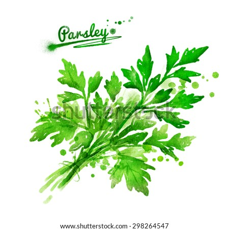 Watercolor hand drawn illustration of a bunch of parsley with paint splashes. - stock photo