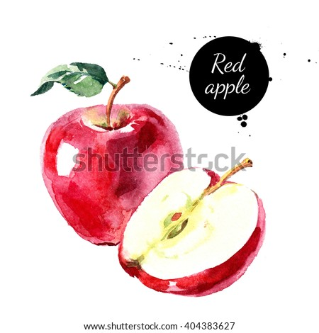 Watercolor hand drawn red apple. Isolated eco natural food fruit illustration on white background - stock photo