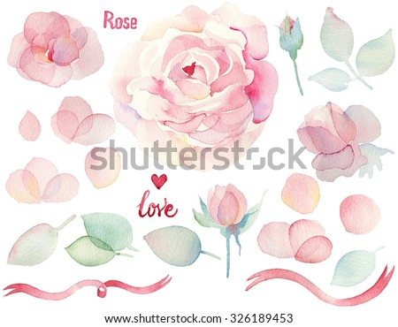 Watercolor hand drawn roses. English roses. Set of flowers traditional drawing and painting by watercolor on white background. - stock photo