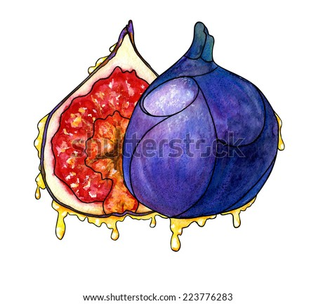 Watercolor hand drawn two stylized figs sliced with flowing honey. - stock photo