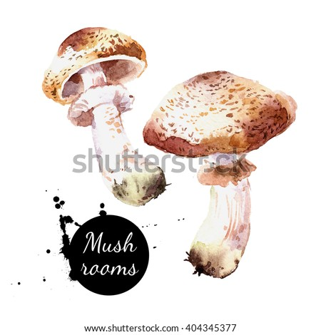 Watercolor hand drawn  wild forest mushrooms champignon. Isolated eco natural food vegetables illustration on white background  - stock photo