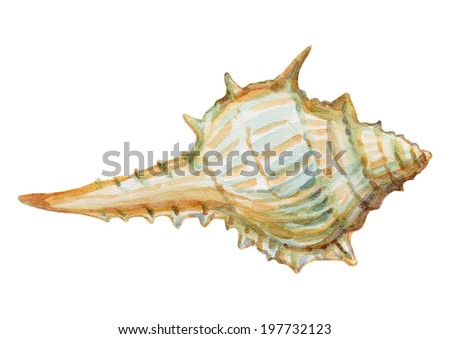 watercolor hand painted sea shell - stock photo