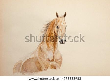 watercolor horse portrait - stock photo