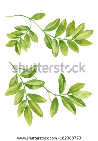 watercolor illustration Green leaves  in simple background  - stock photo