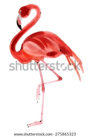 Watercolor illustration of a bird Flamingo - stock photo