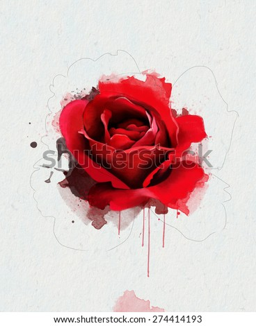 watercolor illustration of a red rose, isolated on a white background, with elements of the sketch - stock photo