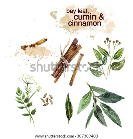 Watercolor illustration of fresh bright colored hand drawn herbs on white background. Good for recipe book illustration, magazine or journal article.  - stock photo