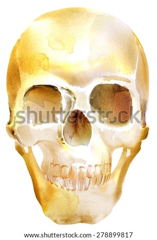 Watercolor illustration of human skull. Isolated on white background. Illustration completely generated in a graphics program from watercolor strokes. - stock photo