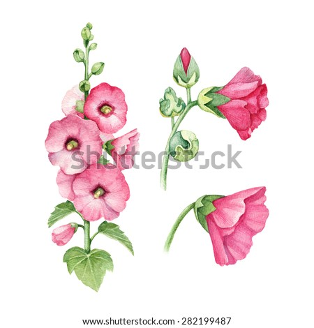 Watercolor illustration of mallow flower - stock photo