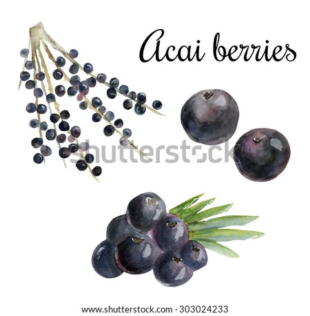 Watercolor illustration of super food acai berry. Organic healthy food. Hand drawn isolated objects on white background. - stock photo