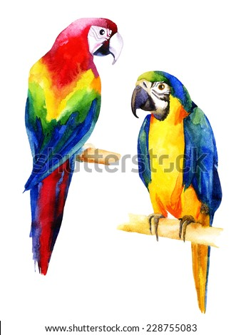 Watercolor illustration of two parrots - stock photo