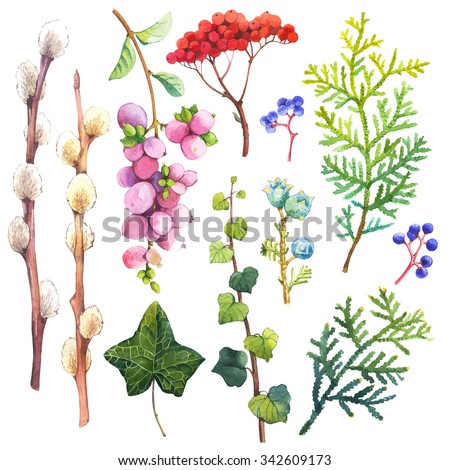 Watercolor illustration with branches, leaves and berries. Set of winter and autumn forest plants. Collection of herbarium garden. - stock photo