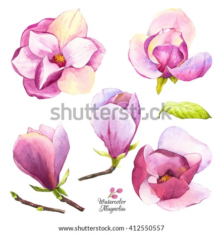 Watercolor illustration with magnolias flowers and bud. Set of spring pink flowers. Collection of watercolor realistic flowers on white background for your design and decor. Botanical illustration. - stock photo