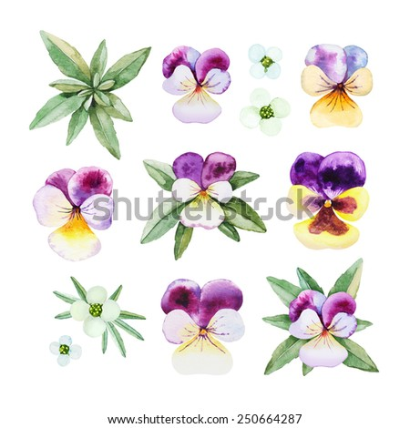 Watercolor illustrations of pansy flowers - stock photo