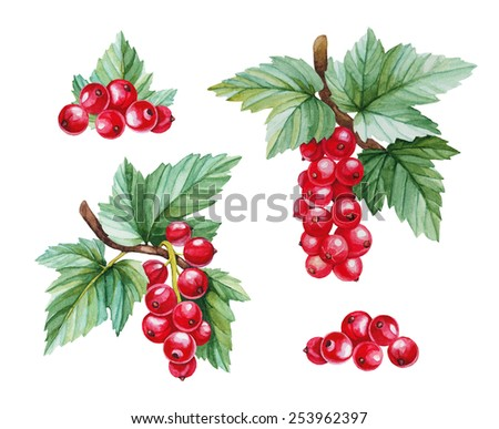 Watercolor illustrations of red currants - stock photo