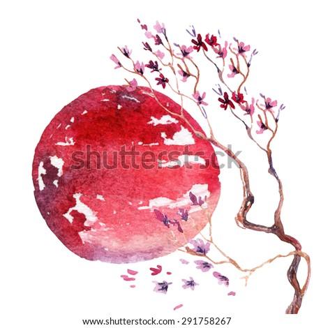 Watercolor japanese cherry blossom. Hand painted sakura flowers on rising sun background.  - stock photo