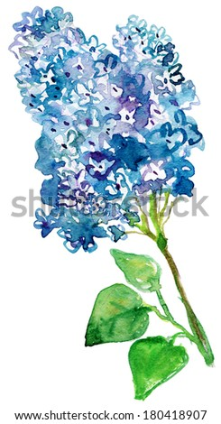 watercolor Lilac branch.  - stock photo