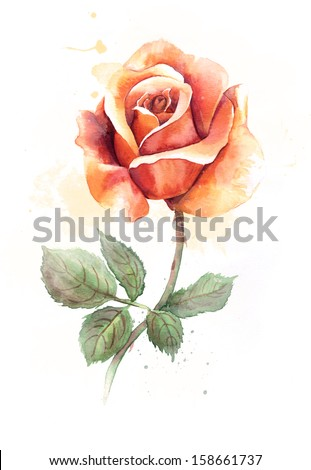 Watercolor orange rose. - stock photo