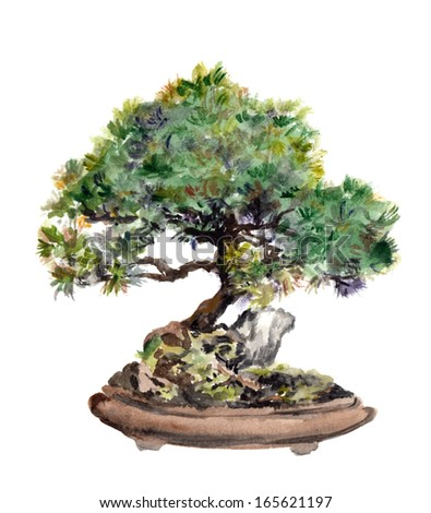 Watercolor painted spruce bonsai tree in pot - stock photo