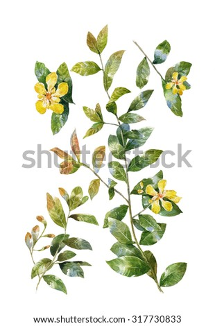 watercolor painting of green leaves and Yellow flower, on white background  - stock photo