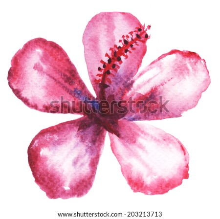 Watercolor painting of mulberry flower.  - stock photo
