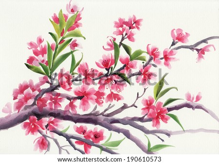 Watercolor painting of tree in blossom with pink flowers. - stock photo