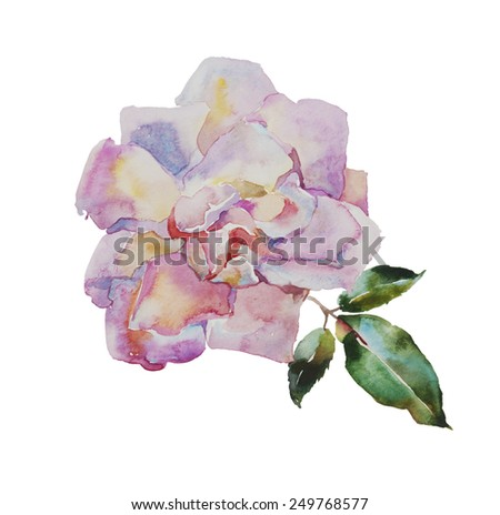 watercolor pale pink rose with leaves original illustration isolated on white background - stock photo